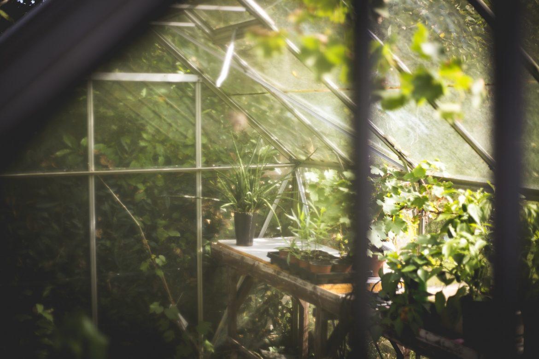 Le jardin simple : comment démarrer votre propre jardin