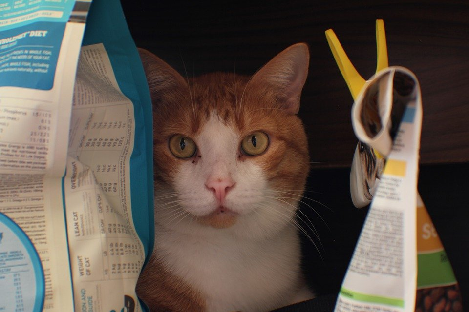 Les critères de sélection d'une croquette pour chat